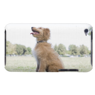Mini golden doodle barely there iPod cover
