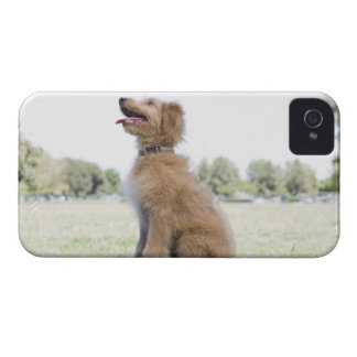 Mini golden doodle iPhone 4 covers