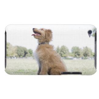 Mini golden doodle iPod Case-Mate case
