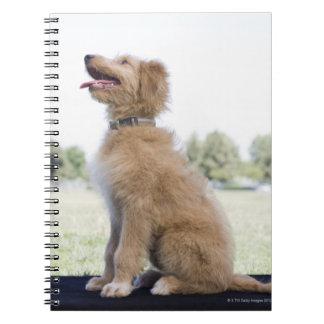 Mini golden doodle notebook