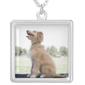 Mini golden doodle silver plated necklace