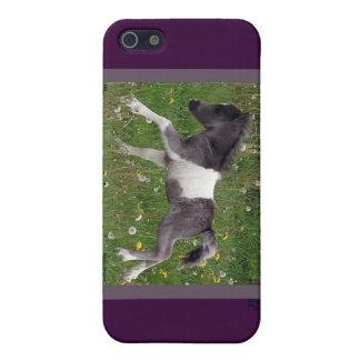 Mini Horse Case For iPhone 5/5S