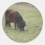 Mini Horse Stiickers Classic Round Sticker