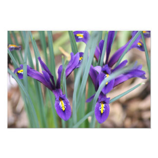 Mini Iris's Photo Art