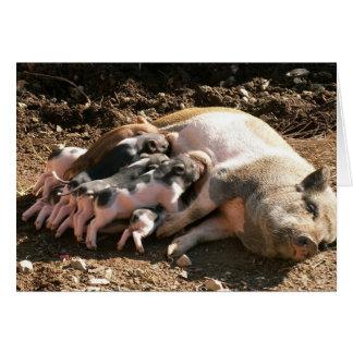 mini-pigs card