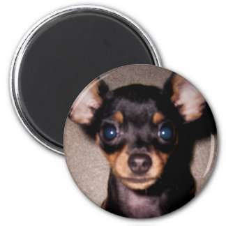 mini pinscher. 6 cm round magnet