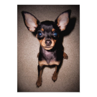 mini pinscher. card