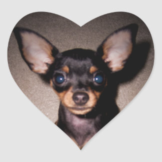 mini pinscher. heart sticker