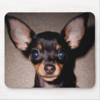 mini pinscher. mouse pad