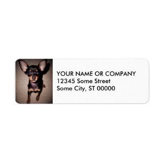 mini pinscher. return address label
