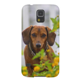 Mini Red Dachshund Galaxy S5 Cases