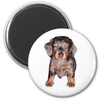 Mini Sleepy Dachshund 6 Cm Round Magnet