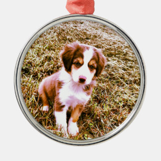 Miniature Australian Shepherd! Mini Aussie Puppy! Christmas Ornament