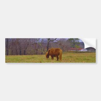 Miniature brown horse blustery sky bumper sticker