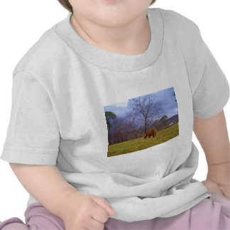 Miniature brown horse blustery sky t-shirts