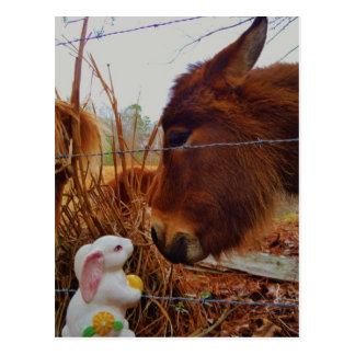 Miniature Brown horse & Easter Bunny Postcard