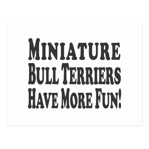 Miniature Bull Terriers Have More Fun! Post Card
