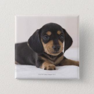 Miniature Dachshund 15 Cm Square Badge