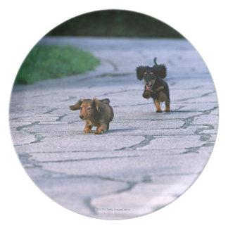 Miniature Dachshund 3 Plate