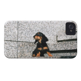 Miniature Dachshund 4 Case-Mate iPhone 4 Case