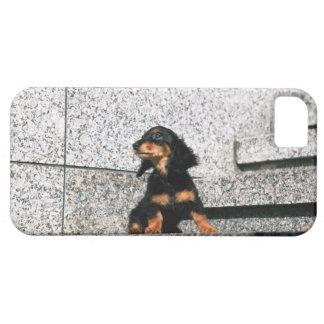 Miniature Dachshund 4 iPhone 5 Cases
