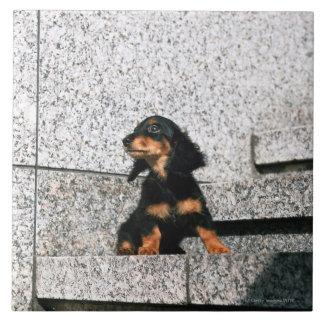 Miniature Dachshund 4 Tile