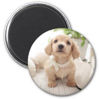 Miniature Dachshund 6 Cm Round Magnet