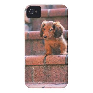 Miniature Dachshund Case-Mate iPhone 4 Case