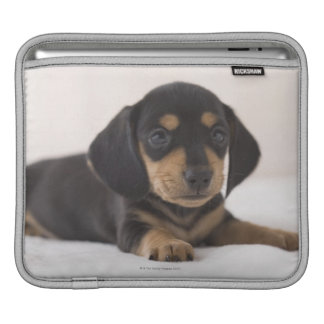 Miniature Dachshund iPad Sleeves