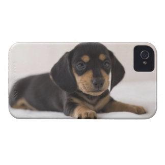 Miniature Dachshund iPhone 4 Cover