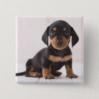 Miniature Dachshund Sitting 15 Cm Square Badge