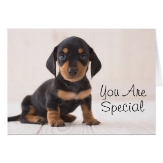 Miniature Dachshund Sitting Card