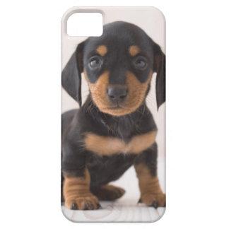Miniature Dachshund Sitting iPhone 5 Cover