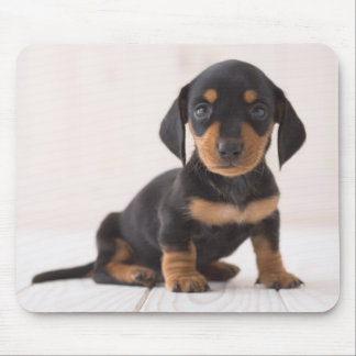 Miniature Dachshund Sitting Mouse Pad