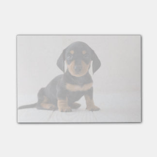 Miniature Dachshund Sitting Post-it Notes