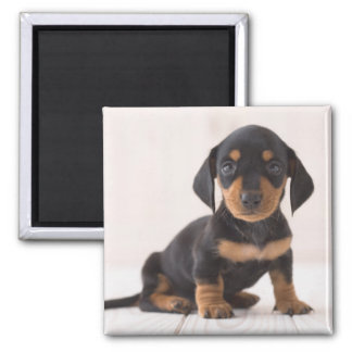 Miniature Dachshund Sitting Square Magnet