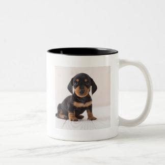 Miniature Dachshund Sitting Two-Tone Coffee Mug