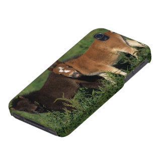 Miniature Foals in Grass Covers For iPhone 4