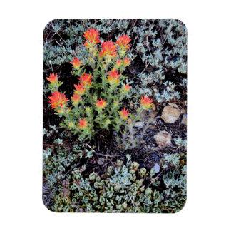 Miniature Garden at Gem Lake Rectangular Photo Magnet