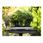 Miniature Green Forest Bonsai Pot Pedestal Leaves Post Card