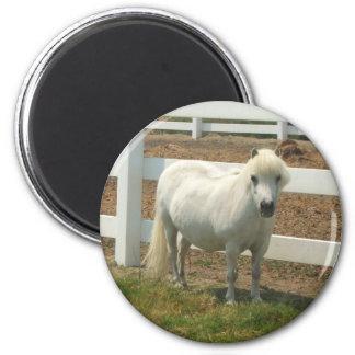 Miniature Horse magnet