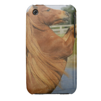 Miniature Horse Rearing iPhone 3 Covers