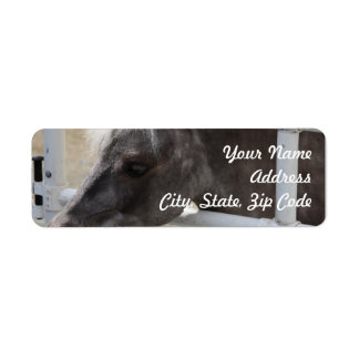 Miniature Horse Return Address Label