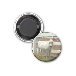 Miniature Horse small magnet