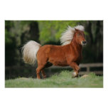 Miniature Horse Standing Poster