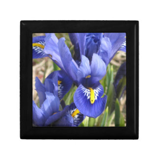 Miniature Iris Gift Box