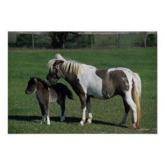 Miniature Mare & Foal Standing Poster