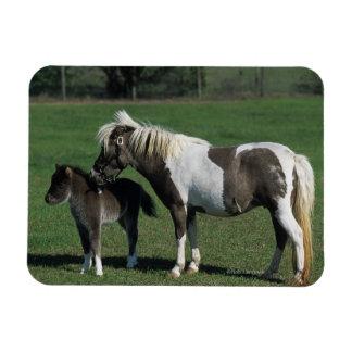Miniature Mare & Foal Standing Rectangular Photo Magnet