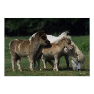 Miniature Mare & Foals 3 Poster