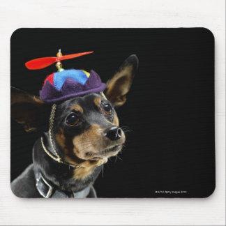 Miniature Pinscher in costume. Mouse Mat